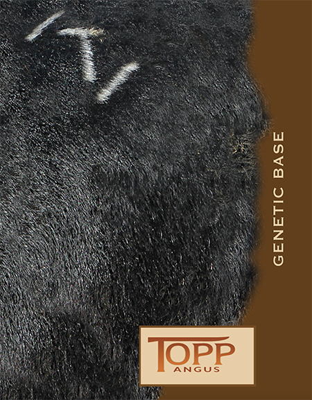2016 Topp Angus Genetic Base Catalog