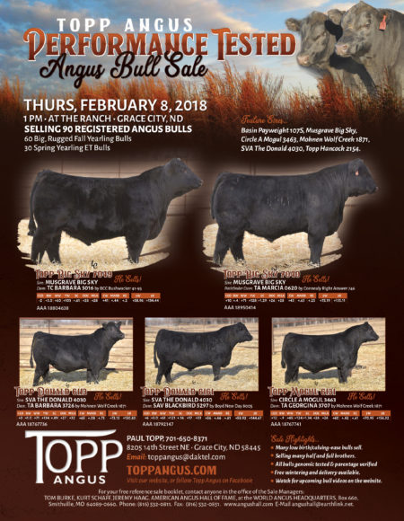 Topp Angus, 2018 Bull Sale Preview