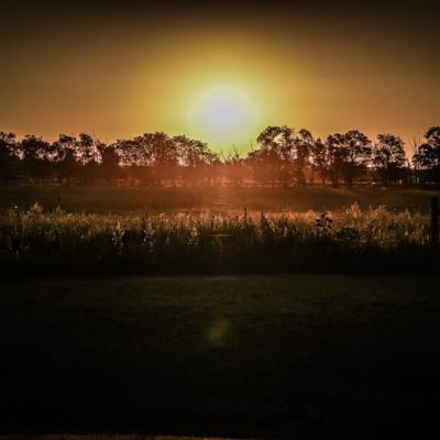 landscape-03239